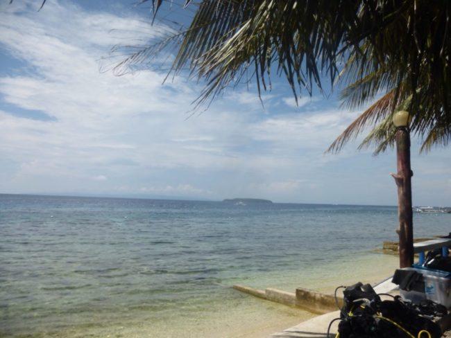 セブ島でジンベイザメと一緒に泳いだ!