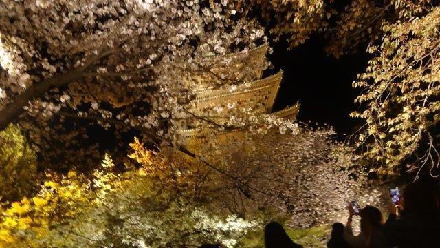 桜をみるための京都旅行