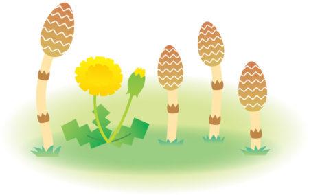 雑草を食べて節約生活