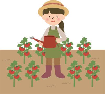 小さなハウスをつくりそこでトマト栽培してみたいです。